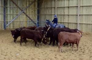 cheval et vache