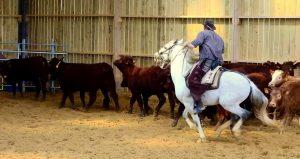 Tri de bétail Benoit
