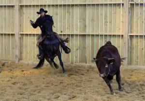 Tri de bétail Morgan 2