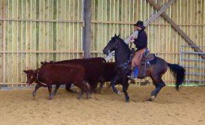 Tri de bétail Morgan