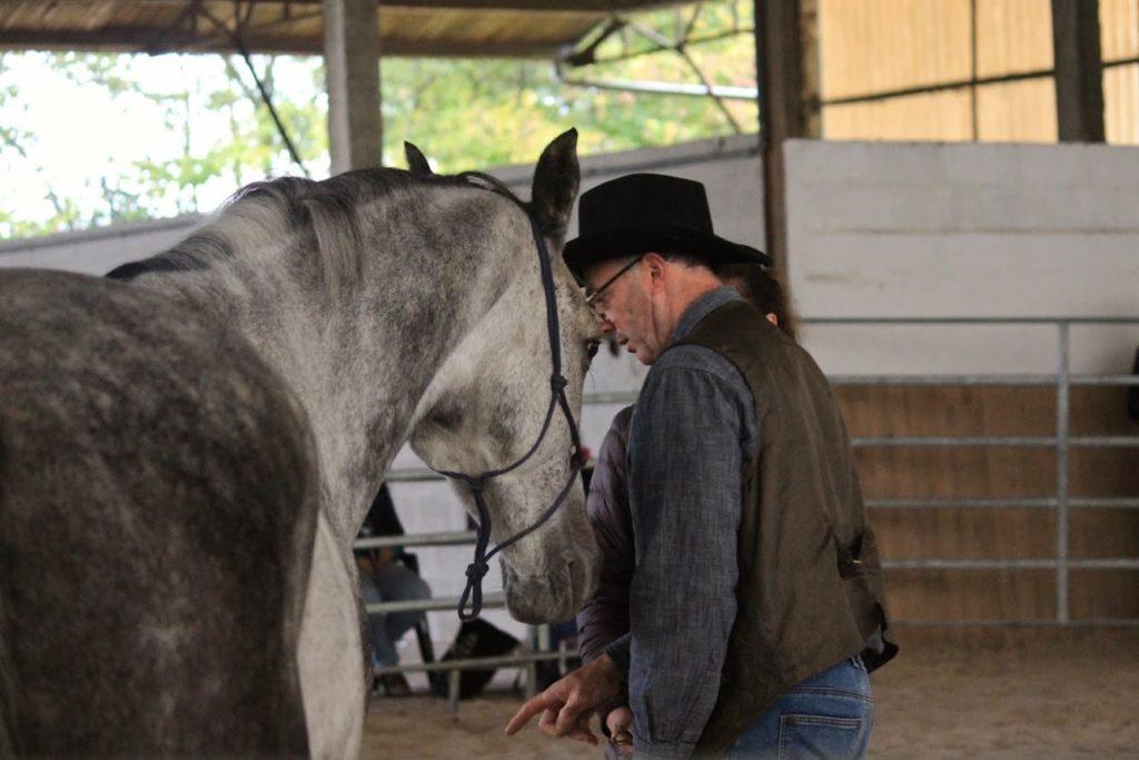 Communiquer Avec Son Cheval La Ferme Du Vallon